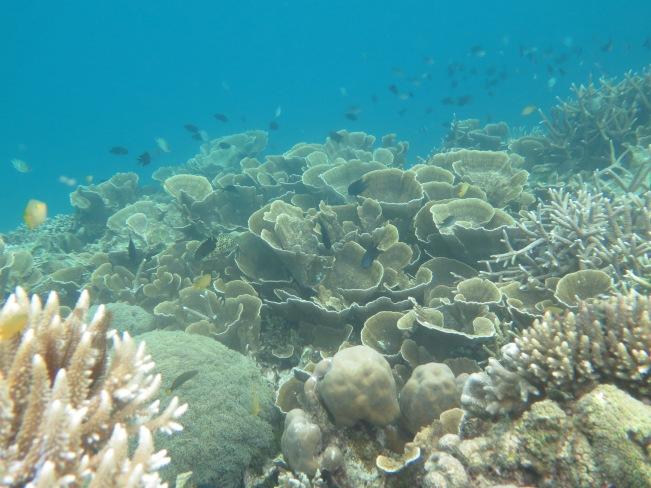 Snorkling di Pulau Monggito